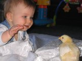Click to view Ashton-First-Chick.jpg full size